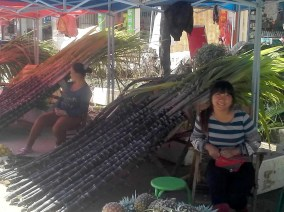 PHOTO: Women at market with giat 9-foot stalks of harvested sugar cane.