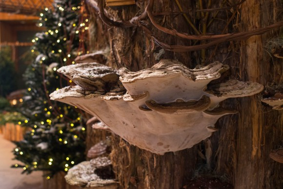 PHOTO: Shelf fungus on display in Wonderland Express.