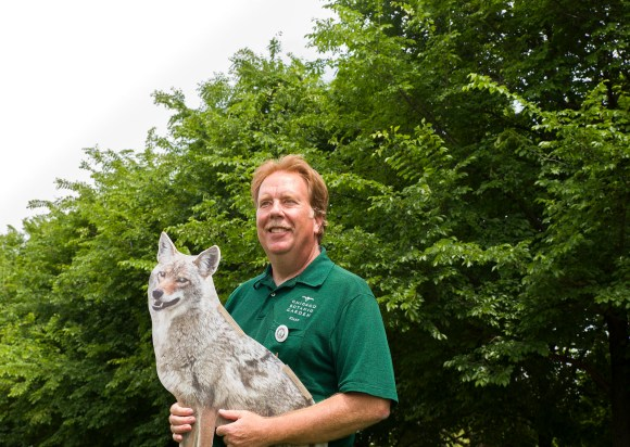 PHOTO: Tom Tiddens poses with a cardboard coyote cutout, used to deter varmints from veg.