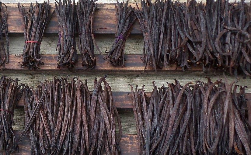 PHOTO: Vanilla bean bundles.