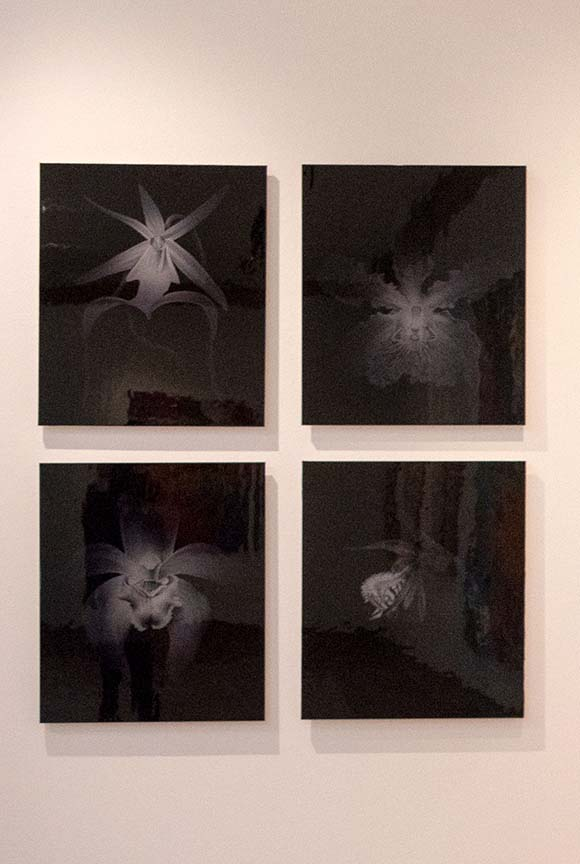 A group of four orchids from the Vanishing Species series by Penelope Gottlieb