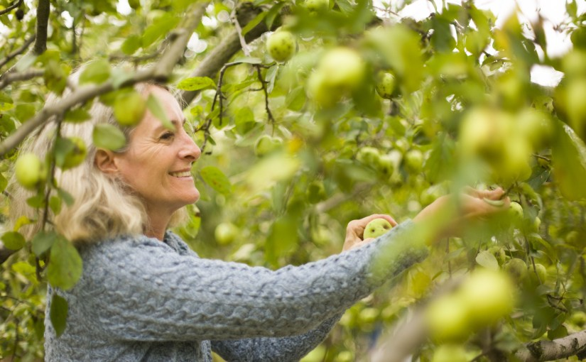 The Legacy of Johnny Appleseed