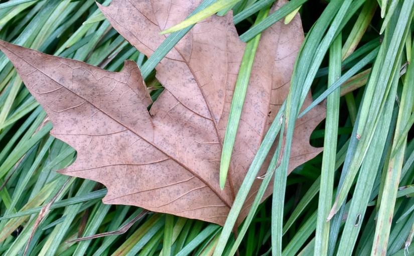 Add green to winter drab—plant evergreen perennials