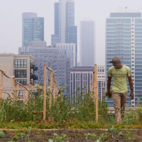 PHOTO: The rooftop garden at McCormick Place, Managed by Windy City Harvest.