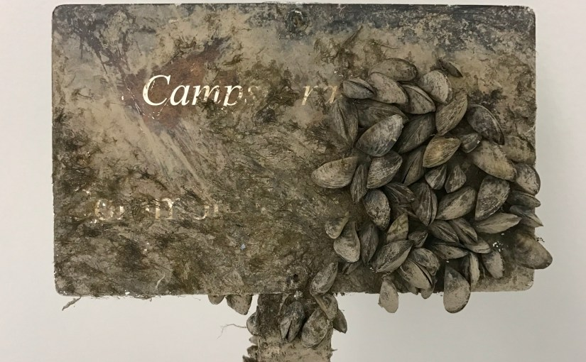 Zebra Mussels in the Garden's Lakes