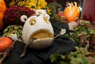 PHOTO: A white pumpkin with a shocked expression and a rubber snake in its mouth.