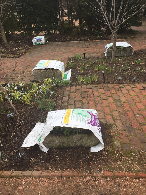 Container plantings in the English Walled Garden are covered lightly with soil bags.