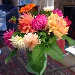 Informal dahlia arrangement