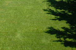 PHOTO: an expanse of green turf grass.