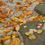 Fallen leaves in color