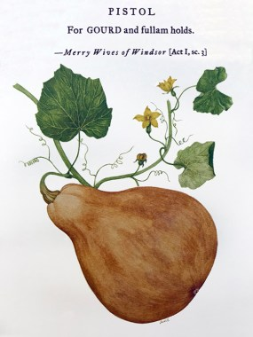 Gourd illustration by Sumié Hasegawa-Collins for Botanical Shakespeare: An Illustrated Compendium