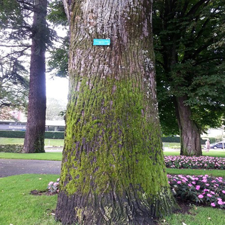 A label in Evian, France. This style of label is attached to the bark of the tree on a spring; this allows the tree to keep growing without being harmed.