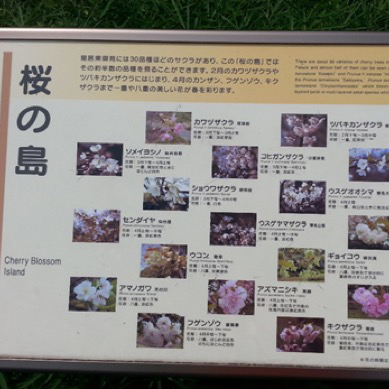 This is a big display/interpretive label at the Imperial Palace, Tokyo; about 12 inches by 18 inches.