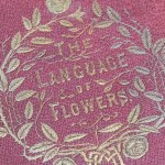 Original cover for The Language of Flowers