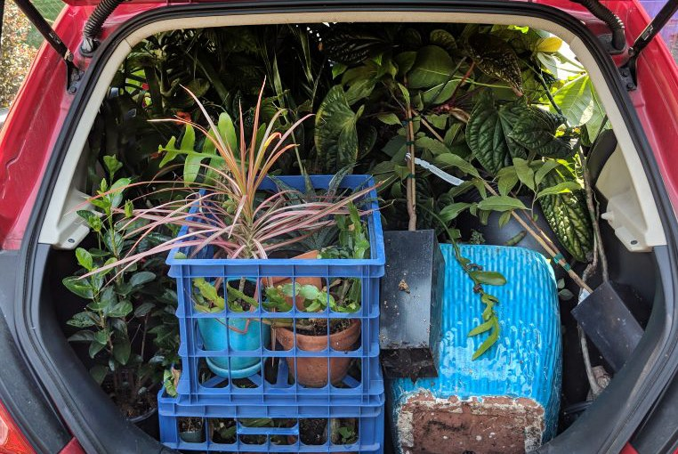 How to move plants to a new home