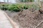 rose mulch310