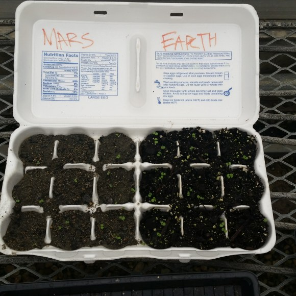 an 18 egg egg carton that has the 9 cells on the left planted with Martian soil and the nine cells on the right planted in earth potting soil; marjoram has sprouted in all 18 cells.