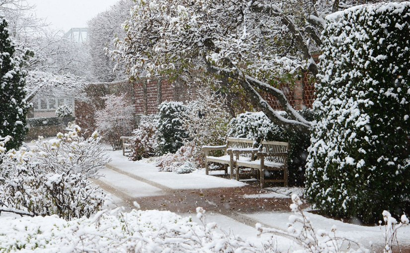 Gardening in Winter: Dos and Don'ts