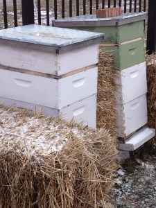 PHOTO: beehives in winter