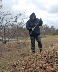 Rake up debris from the lawn with a stiff metal rake.