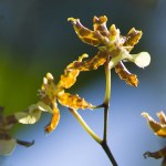 PHOTO: Orchid in bloom.