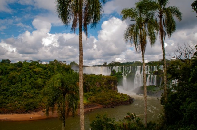 iguazu lower falls palmsjpg