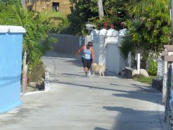 Turtle_Trot_Hopetown_Abaco_2015_20151126_0426