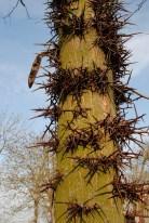 Spiky tree found in Frankfurt