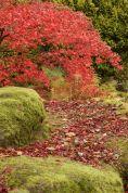 Soft moss covered rocks