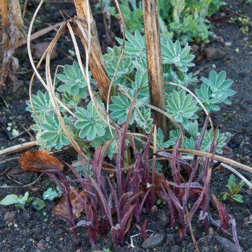 No 5: New herbaceous shoots