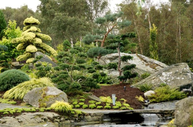 Large rocks provide a great background for the Japanese cloud trees