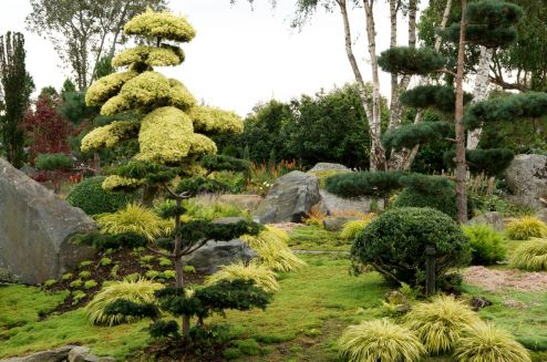 Japanese cloud trees