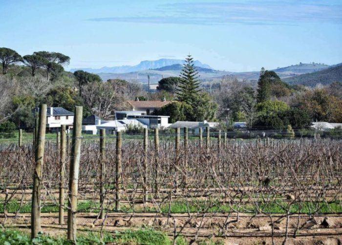 The wine estates in Stellenbosch are gorgeous