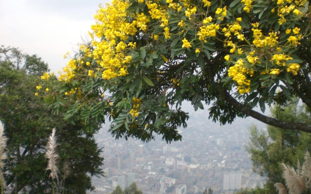 Things to do in Bogota and Villa de Leyva