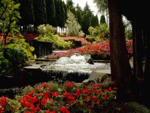 Beautiful-Flower-Landscape