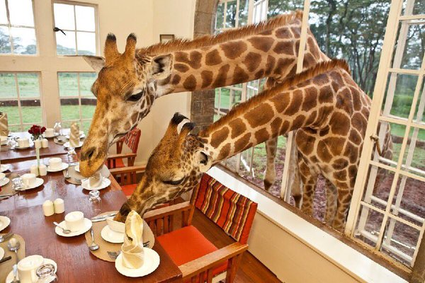 Must see Wildlife Attractions