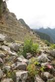 Machu Picchu terraces.