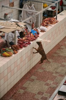 We watched this dog jump several feet off the ground, trying to snag a piece of meat in Puno's Central Market