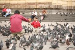 Feeding the birds outside the Monasterio de San Francisco