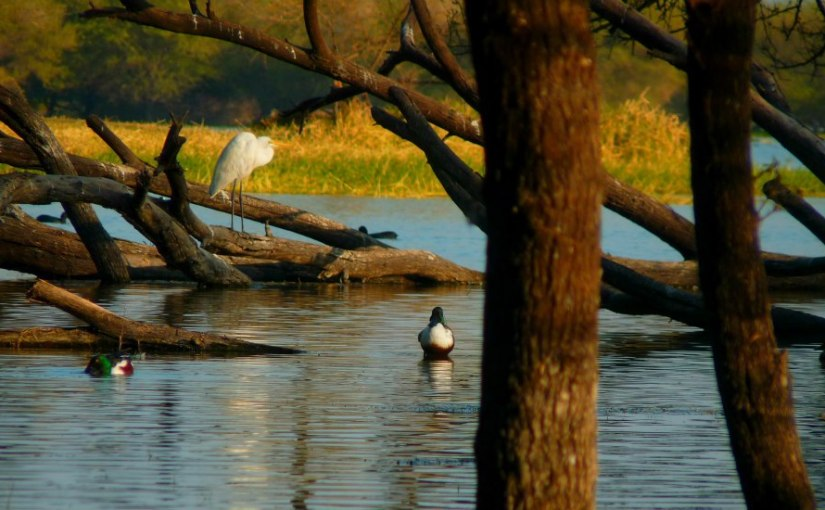 Thol Lake & Kanzari Deer Park near Ahmedabad