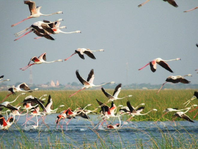 Nalsarovar Flamingo Launching