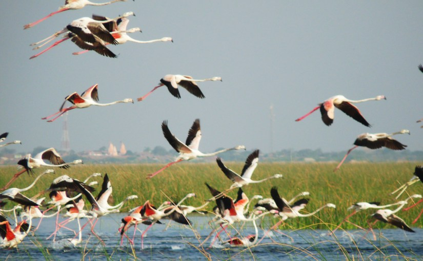 Nalsarovar Flamingo Launching