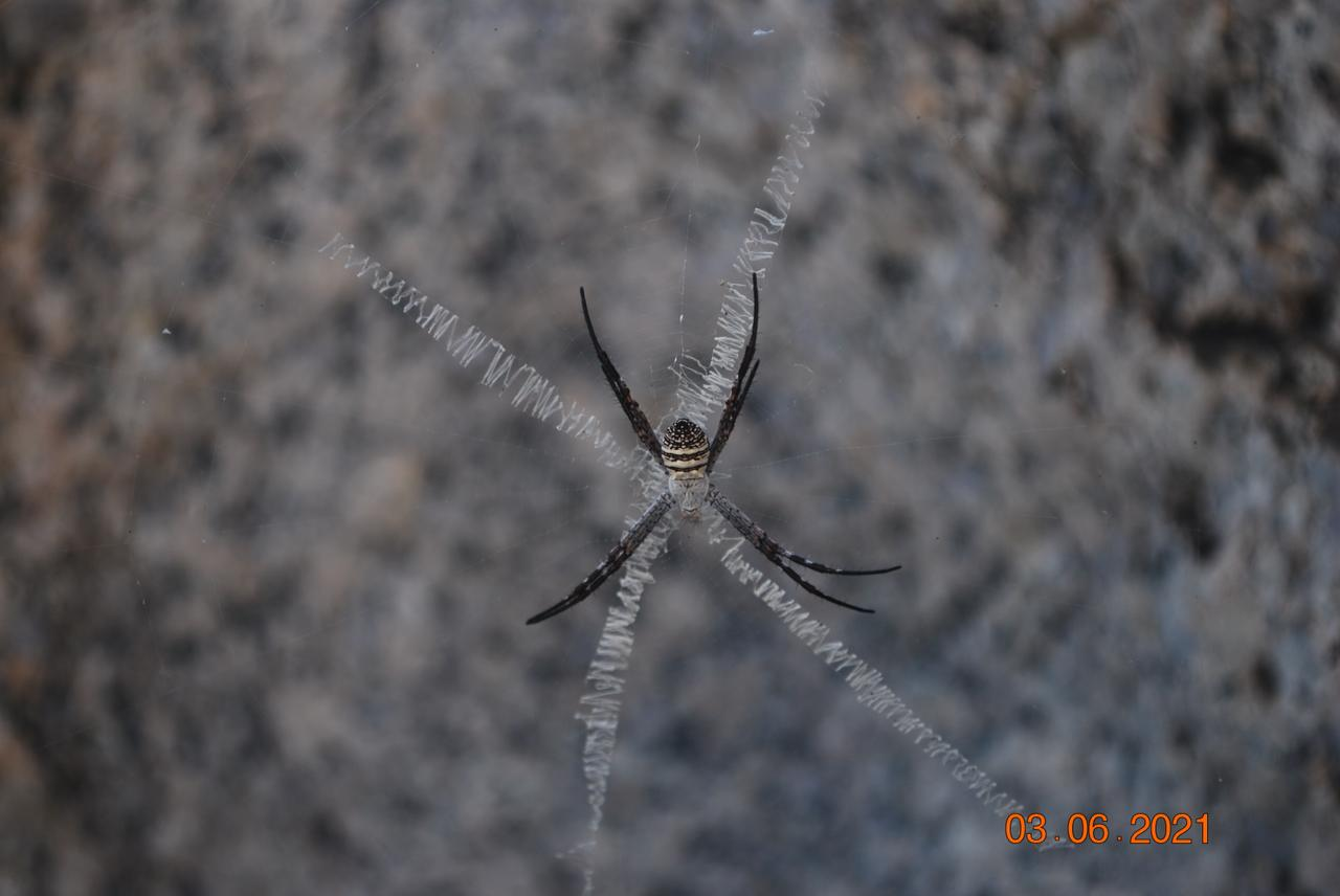 Giant Spider on the way of jessore hill
