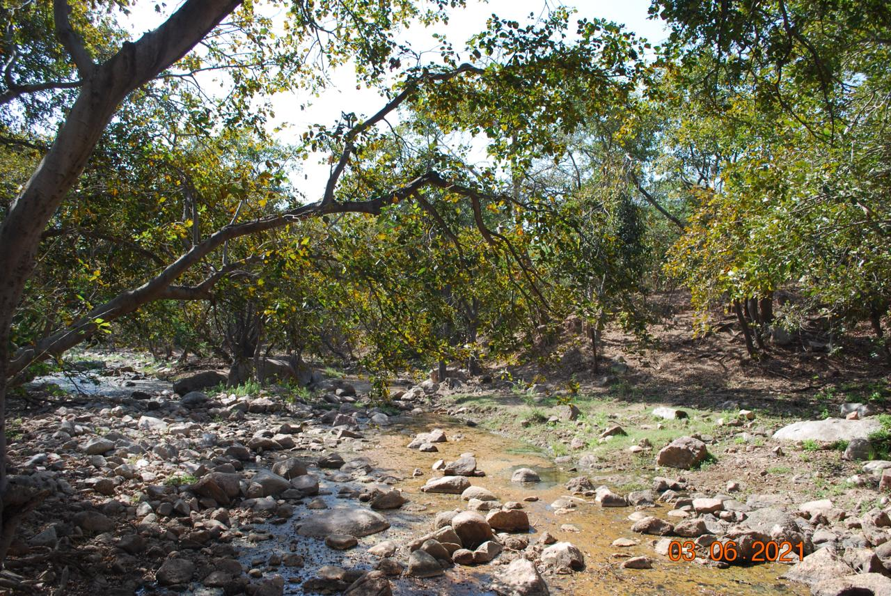 Jungle Trails - Jessore Hills - Photo By Shivang Joshi