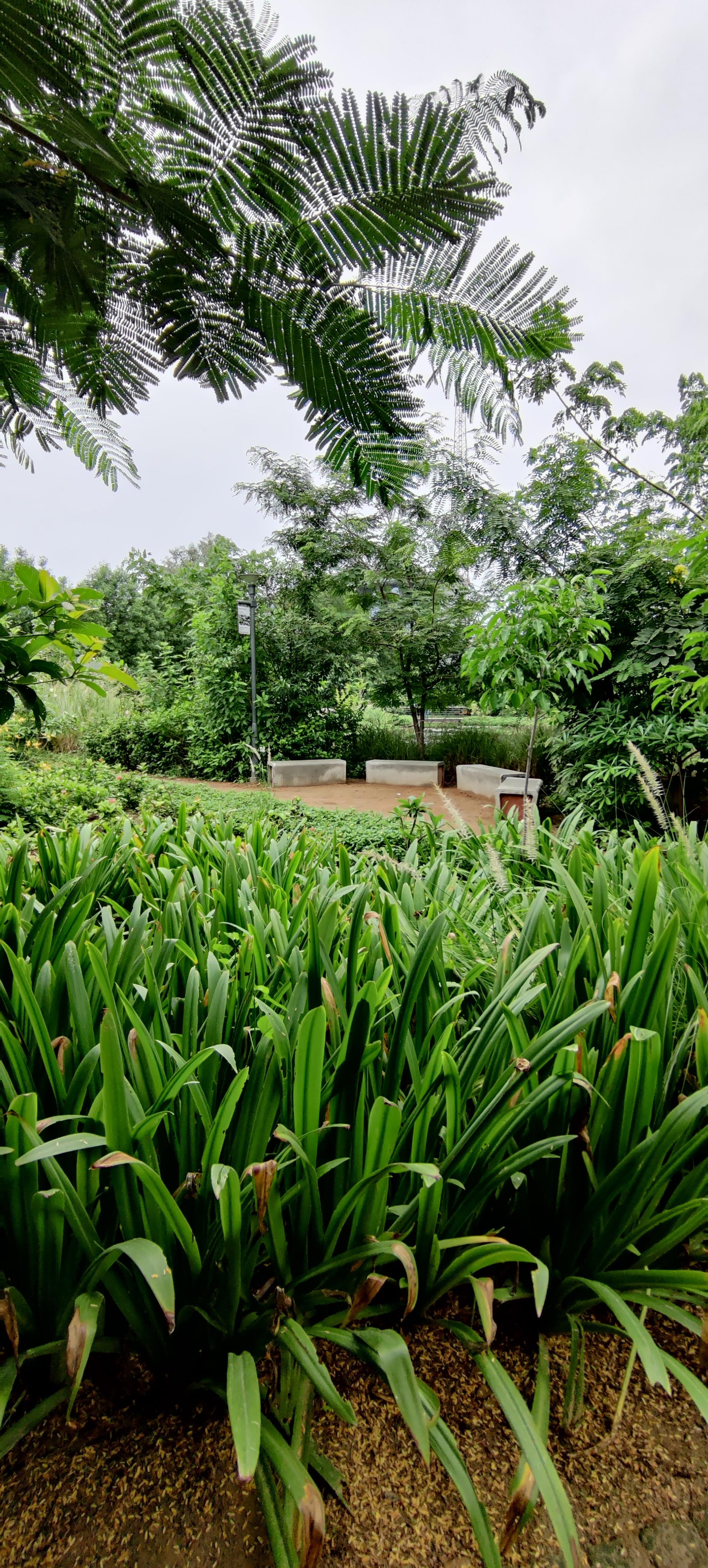 Symphone Forest Landscaping