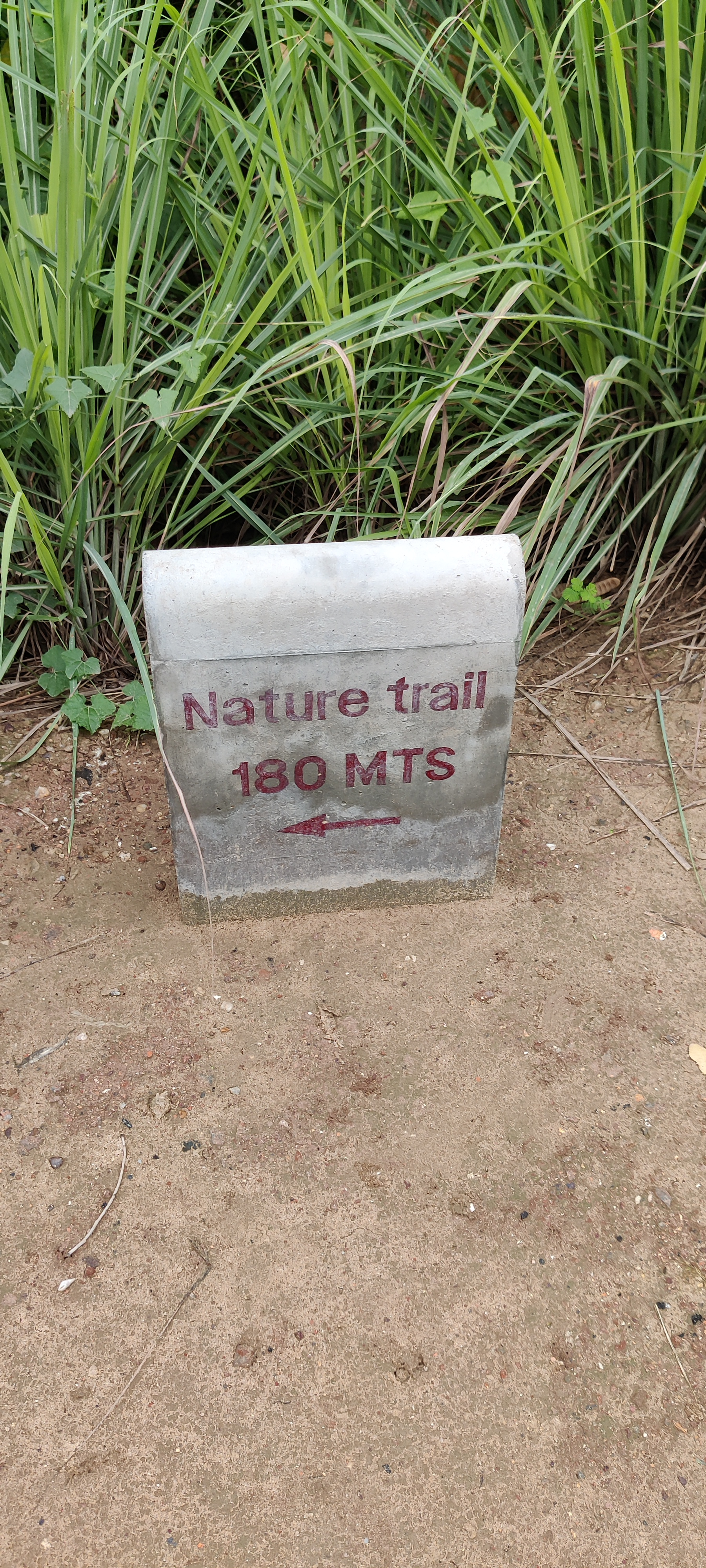 Nature trail at Symphony forest park