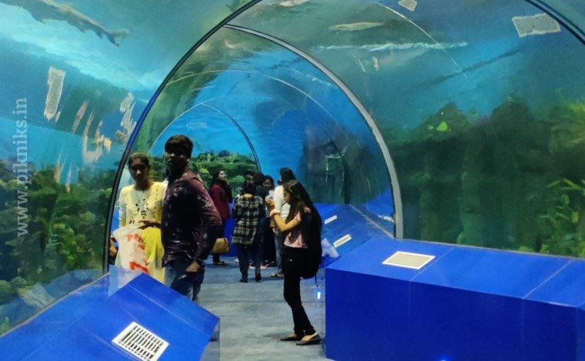 Shark Dome at Aquatic Gallery