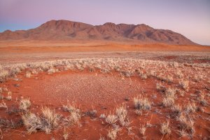 A fairy circle in the NamibRand Nature Reserve in the Namib Desert. Credit Jen Guyton
