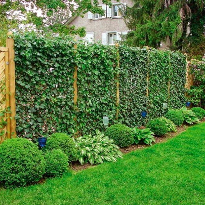 Amazing Privacy Plants That Will Keep Your Neighbors From