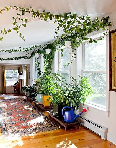 Long Vine Indoor Plants